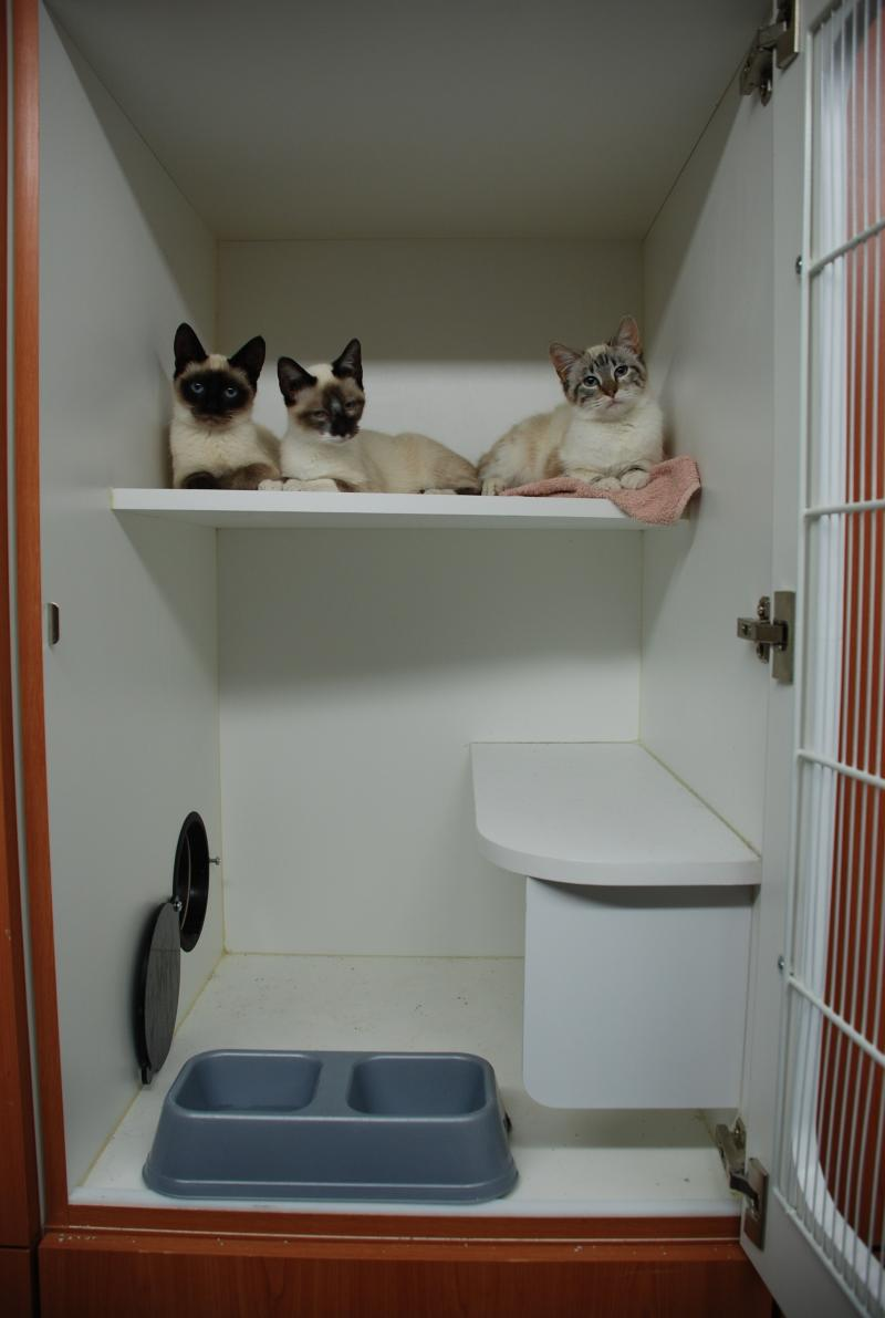 New Blog 1 Cat Boarding